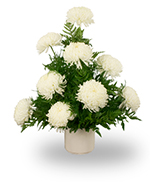 Chrysanthemum arrangement